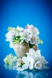 Bouquet de ressort du muguet et de fleur de pomme Image libre de droits