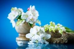 Bouquet de ressort du muguet et de fleur de pomme Images libres de droits