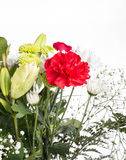 Bouquet de ressort sur le fond blanc Photo stock