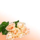 Bouquet de roses images libres de droits