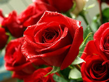 Bouquet de roses Images stock