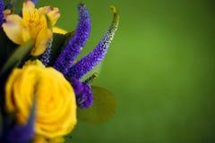 Bouquet de roses de fin de cadeau de fleur, viole de jaune de carte de voeux Images libres de droits