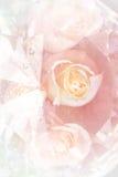 Bouquet de roses de plan rapproché Photographie stock