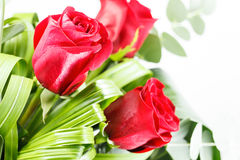Bouquet de roses rouges Photos libres de droits