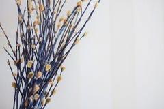 Bouquet de saule de chat Photo stock