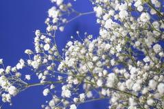 Bouquet de souffle du ` s de bébé et fond de ciel bleu image libre de droits