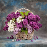 Bouquet de source images libres de droits