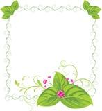 Bouquet de source dans la trame décorative Photographie stock libre de droits