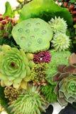 Bouquet de Succulents Photographie stock libre de droits