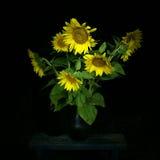 Bouquet de tournesol la nuit images stock