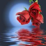 Bouquet de trois roses et lunes rouges. Photos stock
