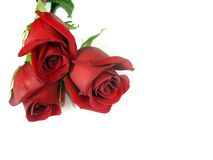 Bouquet de trois roses rouges. Photos stock