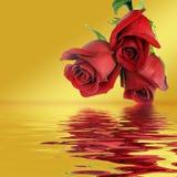 Bouquet de trois roses rouges Photographie stock