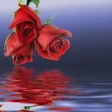 Bouquet de trois roses rouges Photo stock