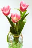 Bouquet de trois tulipes roses dans le vase en cristal vert Image stock