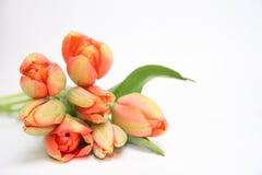 Bouquet de tulipes Photographie stock libre de droits