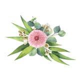 Bouquet de vecteur d'aquarelle avec les feuilles et les branches vertes d'eucalyptus Image stock