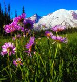 Bouquet de Wildflower au Mt rainier Image libre de droits