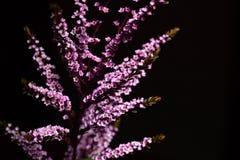 Bouquet decoration plant on black background. stock photo