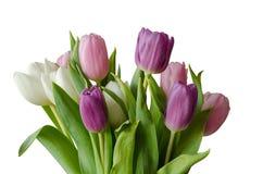 Bouquet dei tulipani lilla isolati Fotografia Stock
