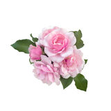 Bouquet of delicate pink roses Stock Photography
