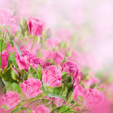 Bouquet of delicate roses, floral Stock Photo