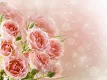 Bouquet of delicate roses Royalty Free Stock Photography