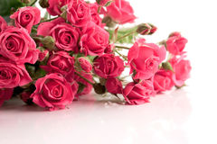 The bouquet of delicate spray roses. The bouquet of delicate pink spray roses Stock Images