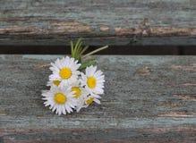 Bouquet della margherita Fotografia Stock