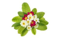 Bouquet della primaverina Fotografia Stock