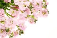 Bouquet des actions Photos stock