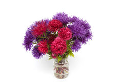 Bouquet des asters rouges et pourpres sur un fond blanc Photos stock