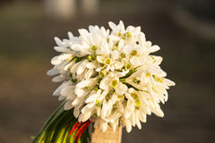 Bouquet des baisses de neige Photos stock