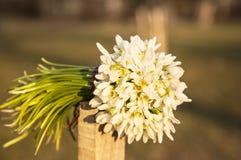 Bouquet des baisses de neige Photos libres de droits