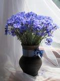 Bouquet des bleuets Photographie stock