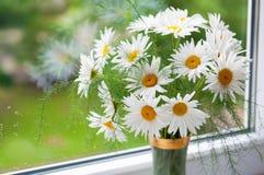 Bouquet des camomiles Images stock