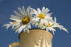 Bouquet des camomilles sur le fond de ciel bleu photographie stock libre de droits