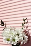 Bouquet des chrysanthèmes blancs sur un fond rose Ombres sur le mur Vacances et concept d'amour Saint-Valentin, le 8 mars et photos libres de droits