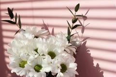 Bouquet des chrysanthèmes blancs sur un fond rose Ombres sur le mur Vacances et concept d'amour Saint-Valentin, le 8 mars et images stock