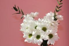 Bouquet des chrysanthèmes blancs sur un fond rose Vacances et concept d'amour Saint-Valentin, le 8 mars et jour des femmes image libre de droits