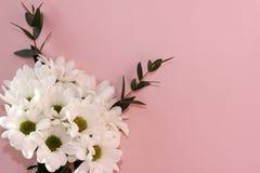 Bouquet des chrysanthèmes blancs sur un fond rose Vacances et concept d'amour Saint-Valentin, le 8 mars et jour des femmes images libres de droits