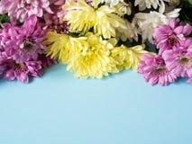 Bouquet des chrysanthèmes multicolores sur un endroit bleu de fond pour le texte Photo libre de droits