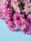 Bouquet des chrysanthèmes multicolores sur un endroit bleu de fond pour le texte Photo stock