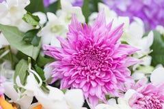 Bouquet des chrysanthèmes pourpres de fleurs avec l'orchidée Image libre de droits