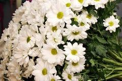 Bouquet des chrysanthemums blancs Ressort, été, fleurs 8 mars photos stock
