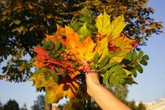 Bouquet des feuilles de jaune et de vert à disposition Image libre de droits