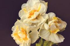 Bouquet des fleurs blanches au foyer mou sur le fond mou Photos libres de droits