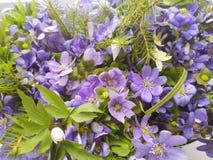 Bouquet des fleurs bleues et blanches d'anémone image stock
