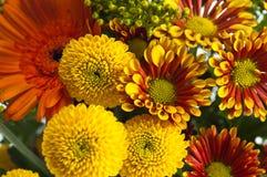 Bouquet des fleurs d'été, plan rapproché Photographie stock libre de droits