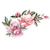 Bouquet des fleurs de pivoine watercolor Photo stock